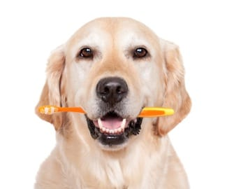 pet_dental_care